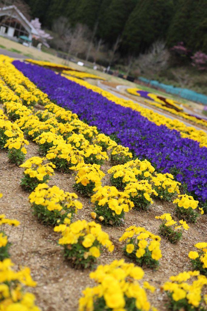 レイクウッズガーデンの花畑