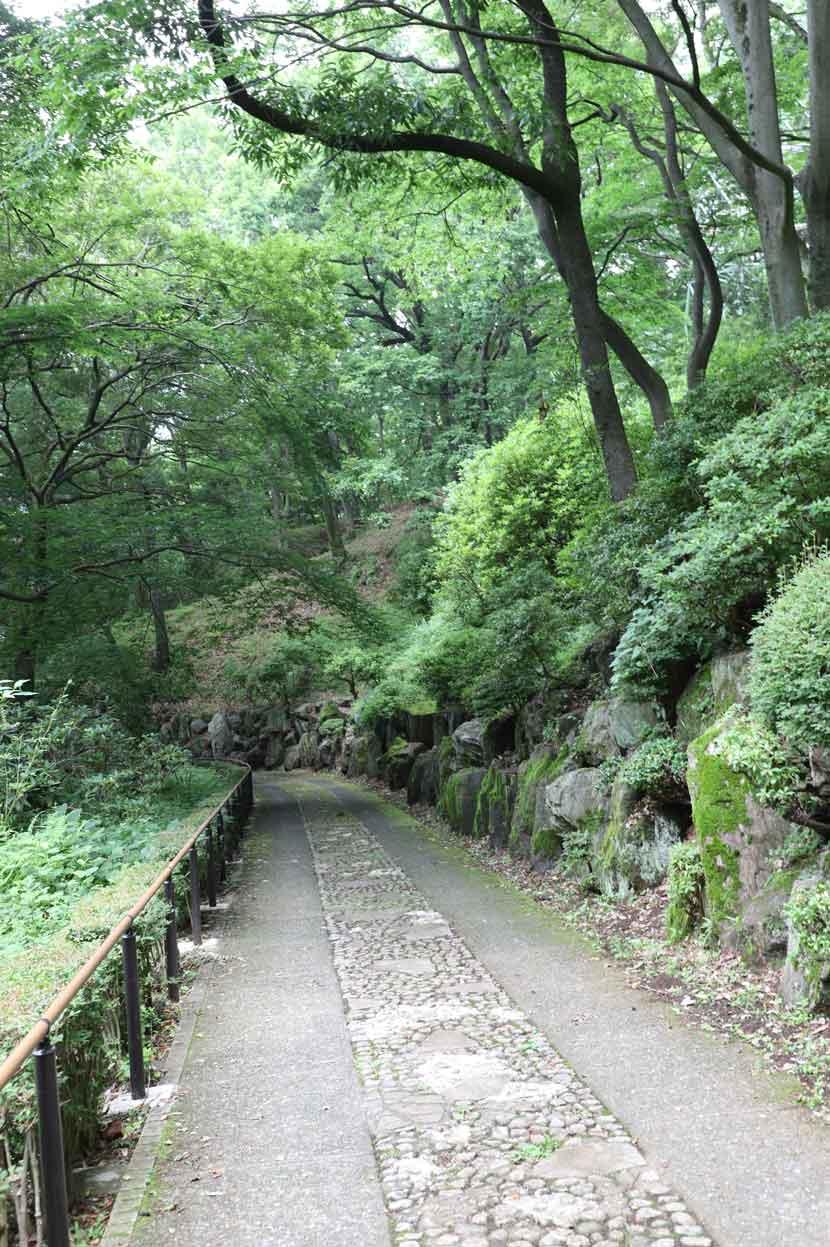 七沢森林公園の散歩道