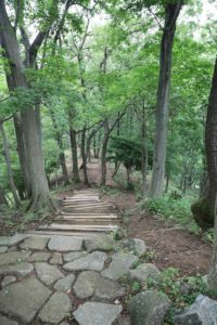 七沢森林公園の遊歩道