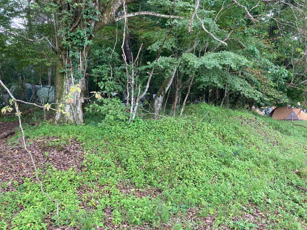 レイクロッジヤマナカの林間サイト