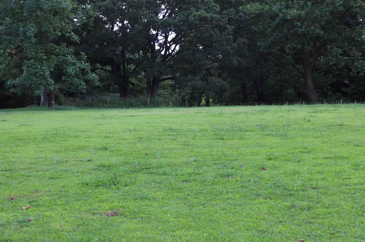 県立青葉の森公園の芝生広場