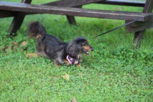 県立青葉の森公園での犬の散歩