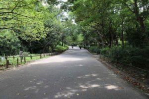 千葉県立青葉の森公園の散歩道