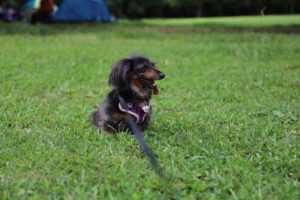 千葉県立青葉の森公園の芝生広場