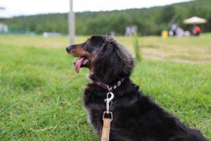 サンメドウズ清里での犬の散歩