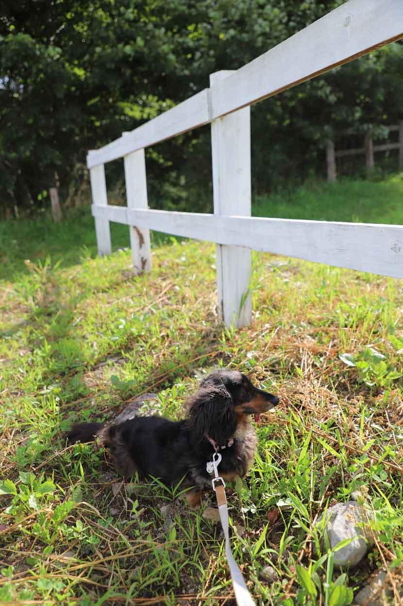 清泉寮での犬の散歩