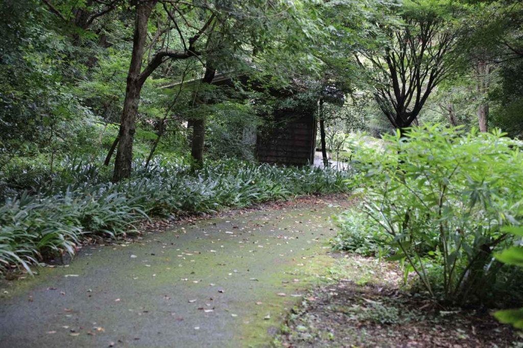 木に囲まれた遊歩道