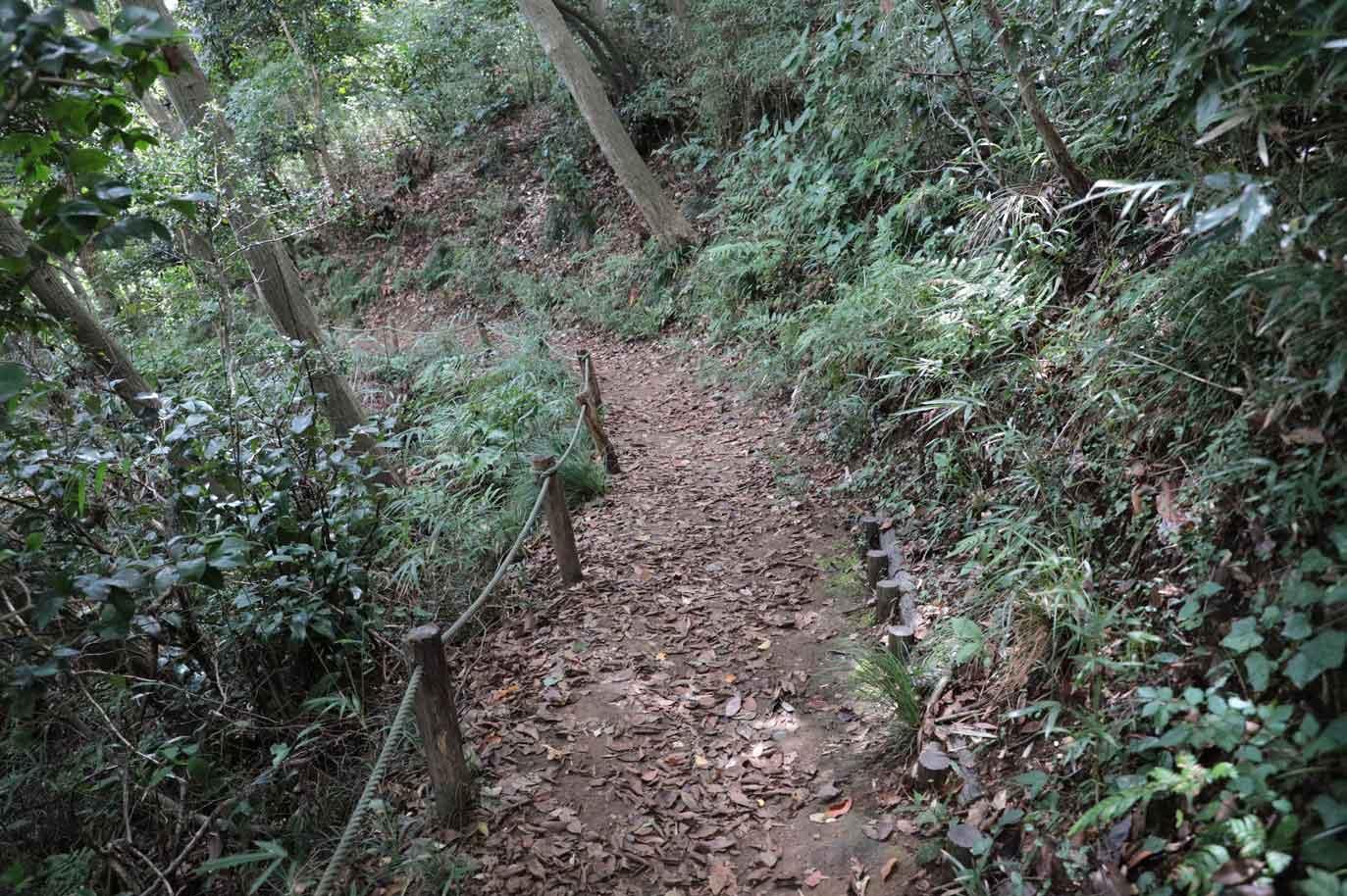 鎌倉中央公園の散歩道