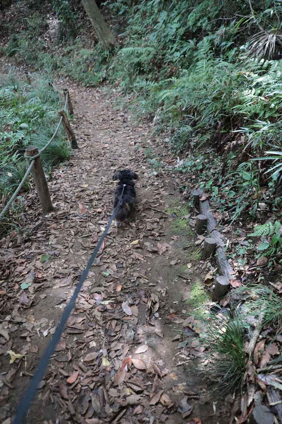 鎌倉中央公園での犬の散歩