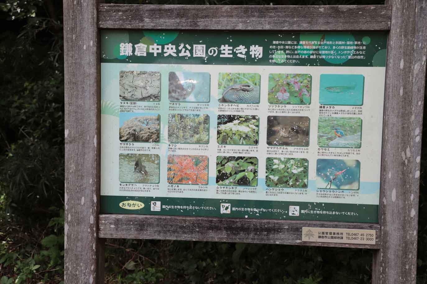 鎌倉中央公園の昆虫
