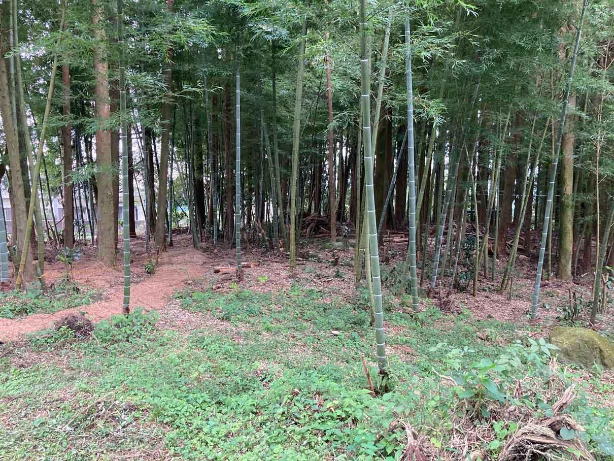 富士山ワイルドアドベンチャーの竹林のエリア