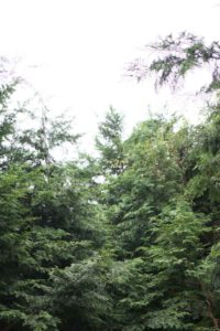 富士山ワイルドアドベンチャーの林間サイト