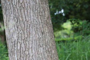 青葉の森公園にいたセミ