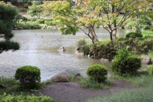 こども自然公園の大池