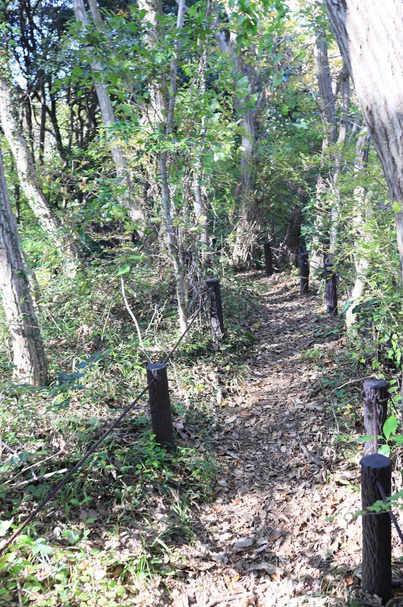自然観察の遊歩道