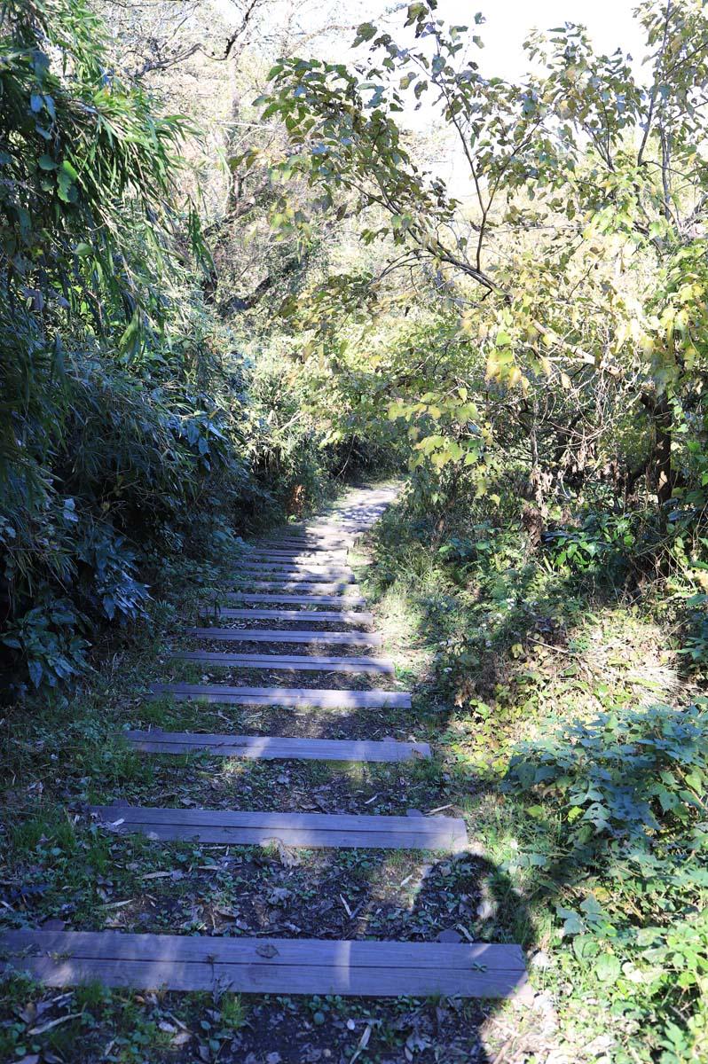 自然に囲まれた階段