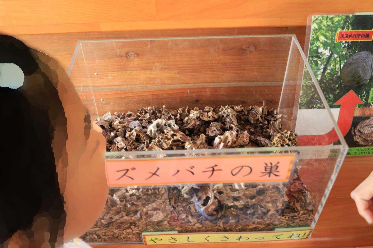 スズメバチの巣の展示