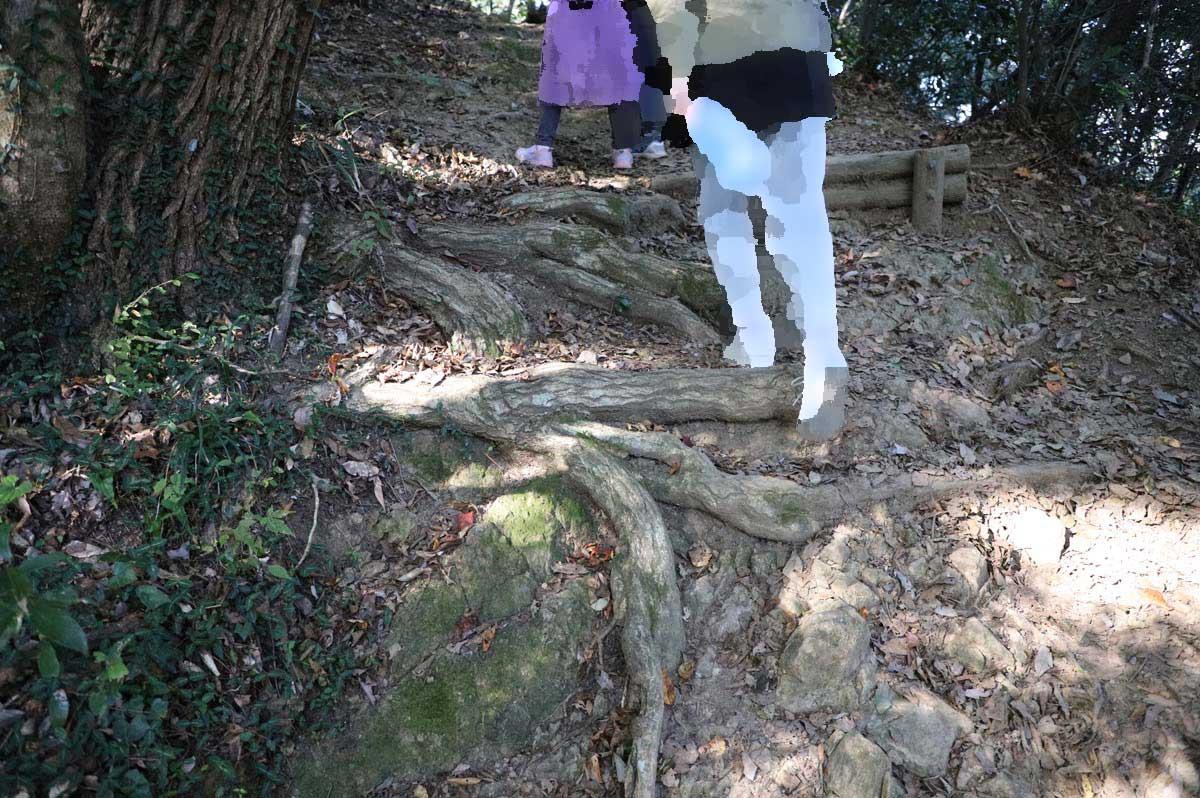 根が張っていて歩きにくい遊歩道