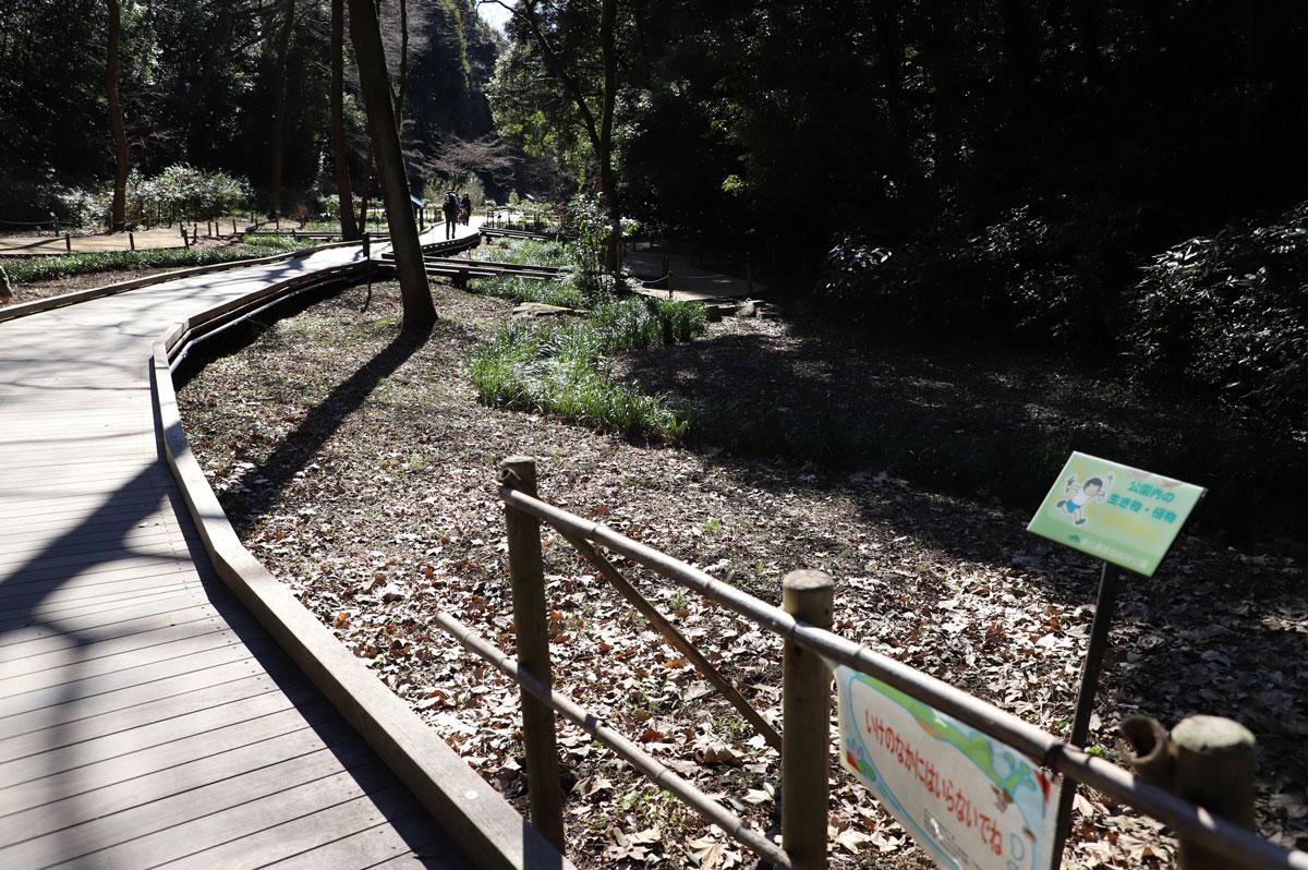 湿生植物園の遊歩道